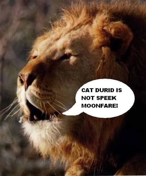 Cat Durid Is  Fite