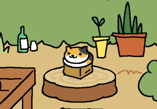 Calico in a box