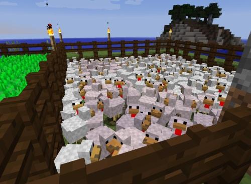 Crowded chicken farm