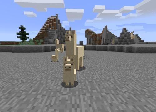 A family of llamas