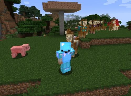 All my llamas dressed up