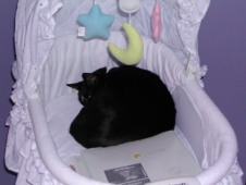 In the bassinet