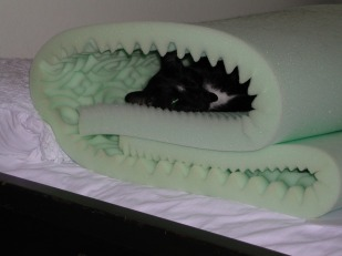 Oscar hiding in a roll of foam