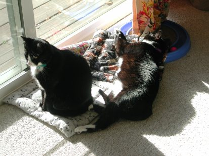 Felix and Oscar in the sun