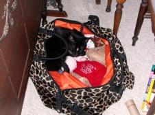 Oscar packed to go