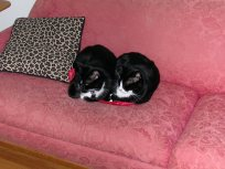 Sharing a piece of red cloth on the couch