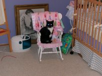 Kitty in the chair