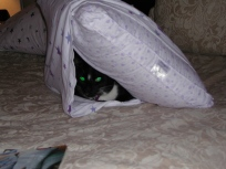 Hiding in a pillow case